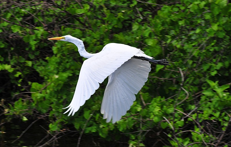 white heron analytical essay