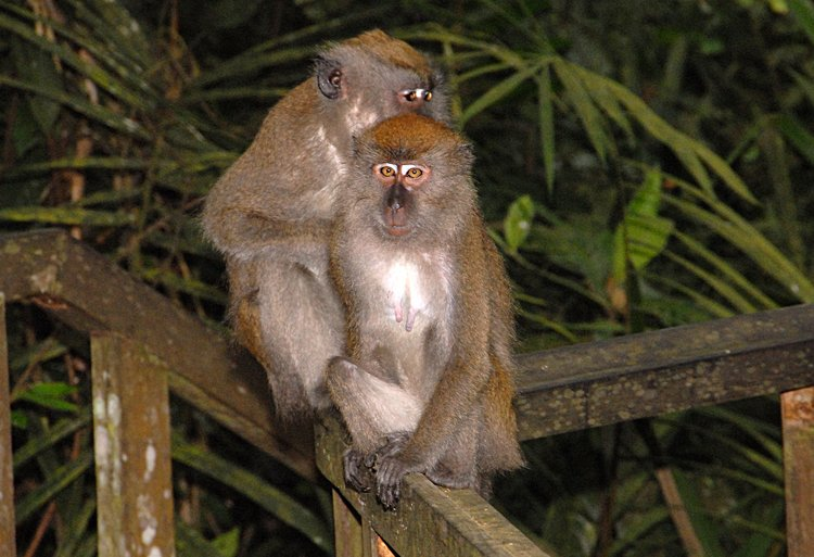 essays on monkeys