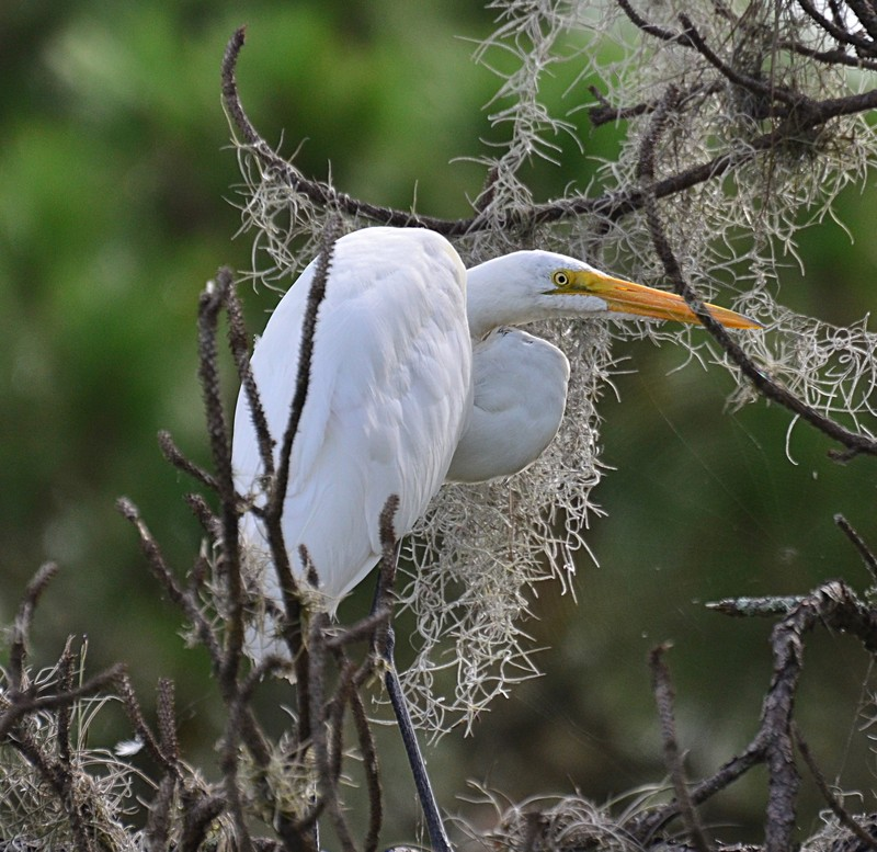 white heron essays A white heron follows the lives of two women who live their lives in touch with the wild new england wilderness much of the story is spent giving vivid descriptions of the surrounding nature, fr.
