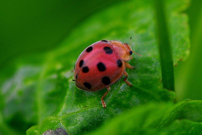 Miraculous ladybug english dub comparison essay