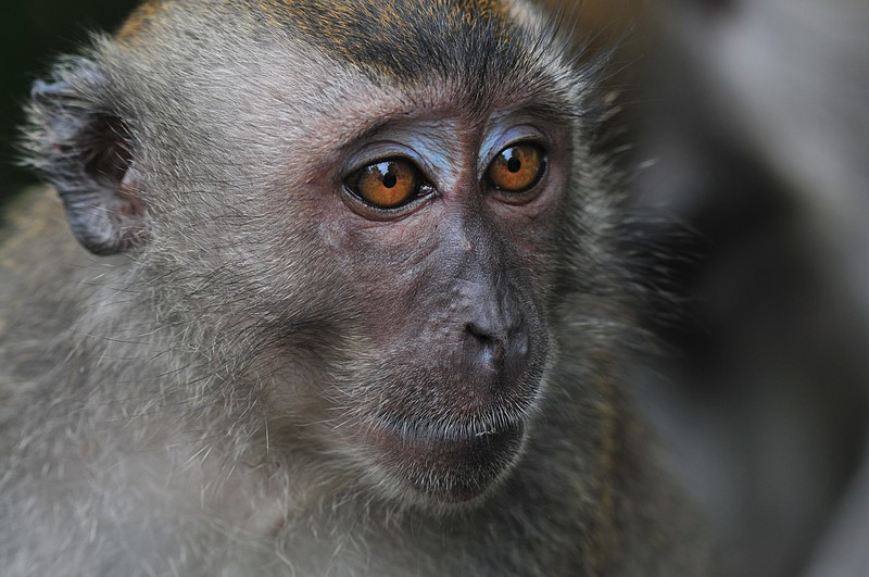 Jellycat Bashful Monkey Really Big 31 inches  amazoncom
