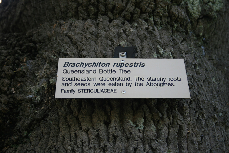 nov 19 3442 bottle tree sign