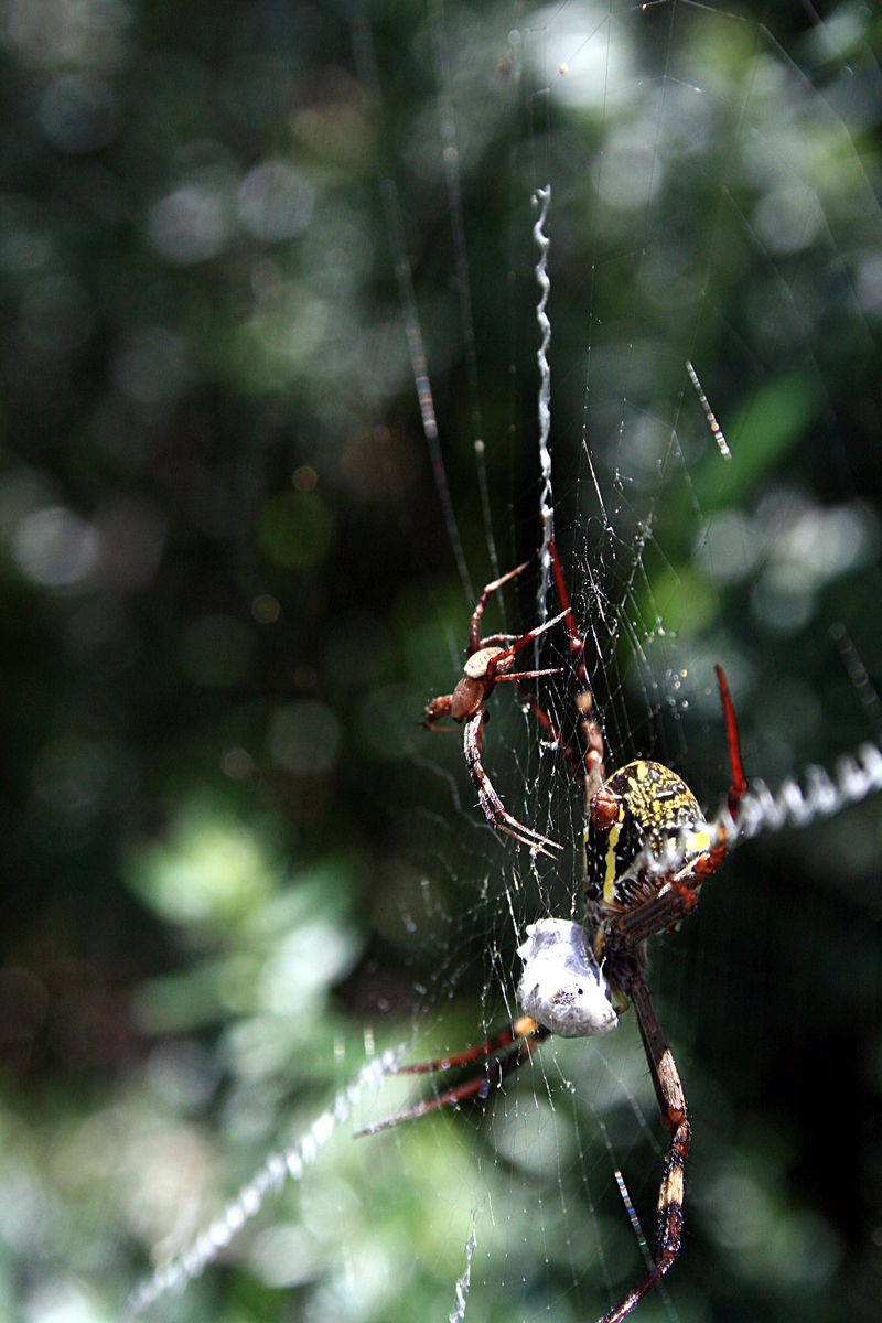 nov 20 3869 argiope