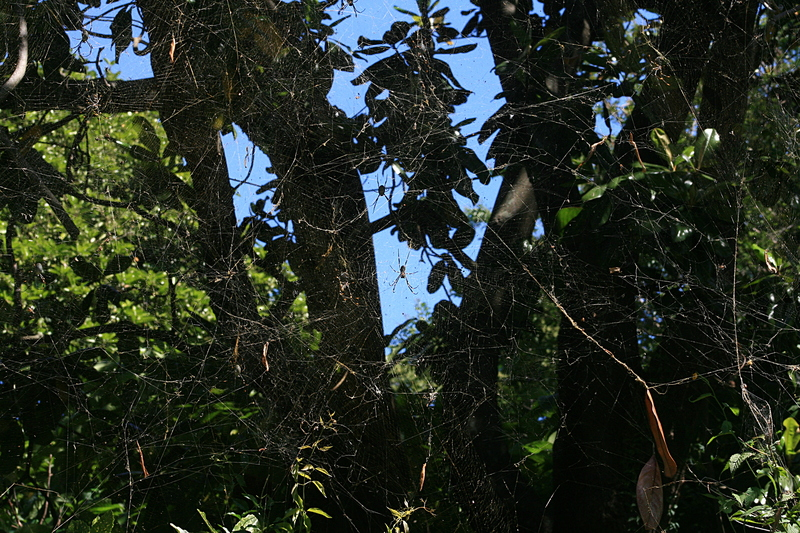 nov 20 4097 many nephila