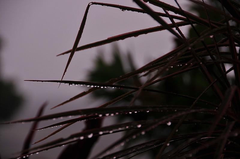 05 The Rain