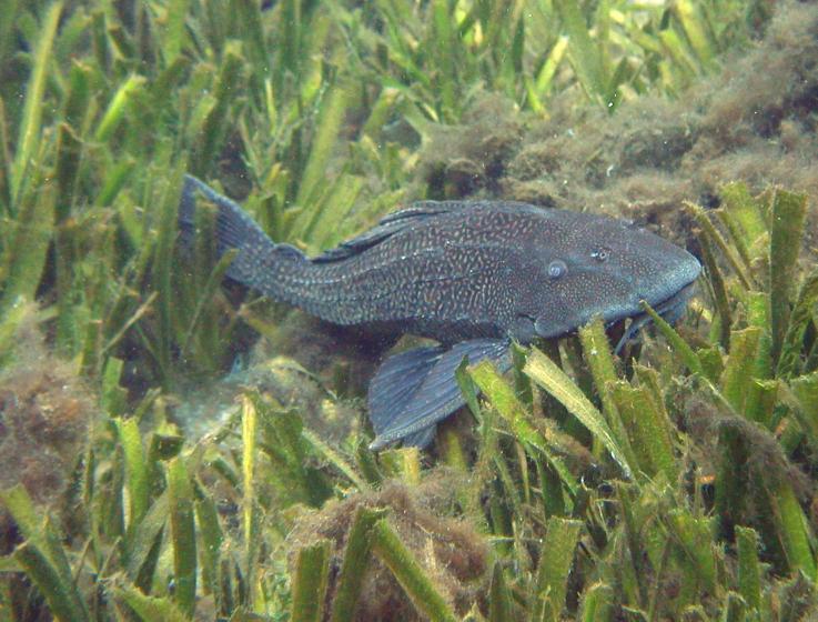 Frank 39 s photo essays for Freshwater sucker fish